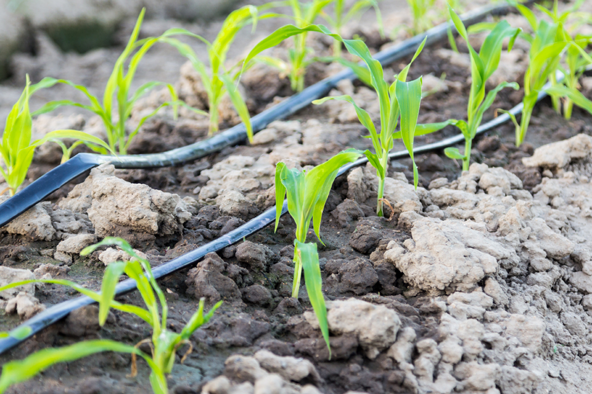 Image result for drip irrigation